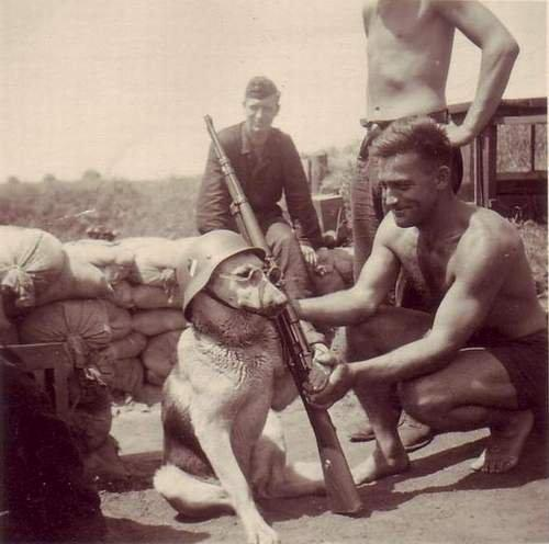 A dog being posed by a German soldier early 1940s